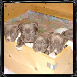 puppies 5 weeks old