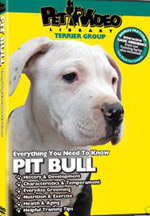 pitbull videos for sale
