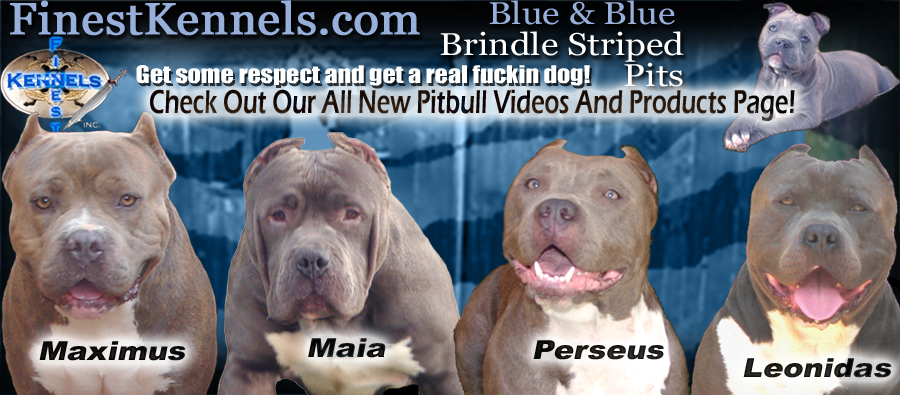 finest kennels california banner