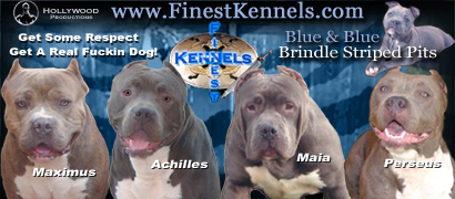 Pitbull Puppies For Sale Los Angeles Riverside Southern California-Finest Kennels