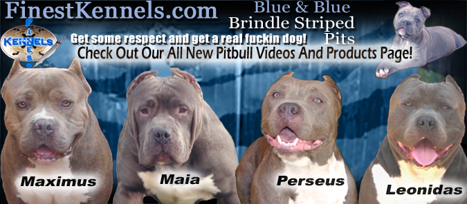 finest kennels texas branch