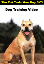 The Full Train Your Dog DVD--$19.95